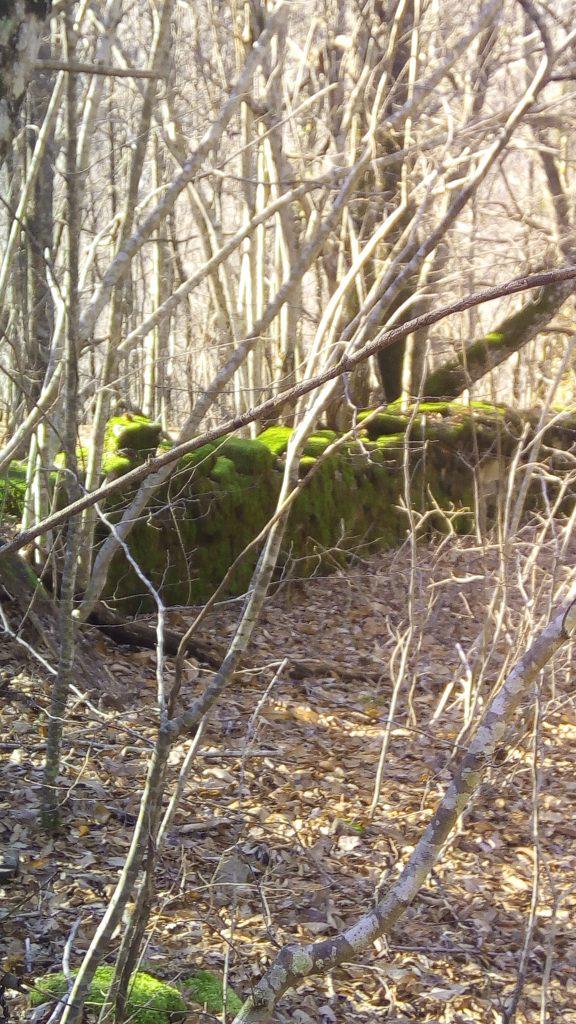 vecchio muretto a secco che segnava un confine