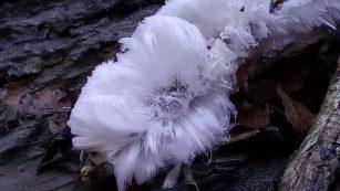 Alla scoperta dei frost flowers
