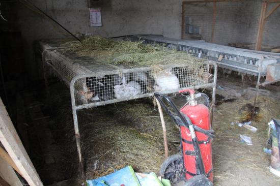 allevamento coniglio piccola azienda agricola
